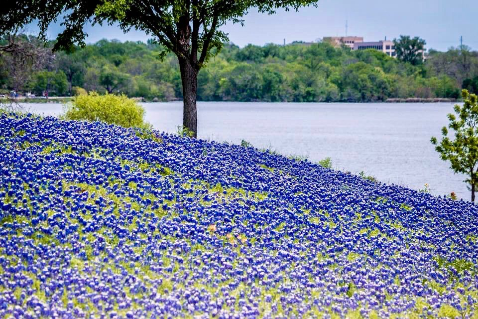 Spring at White Rock Lake - photography by Bobby Baird